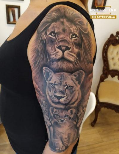 Claudiu - 3 Löwen